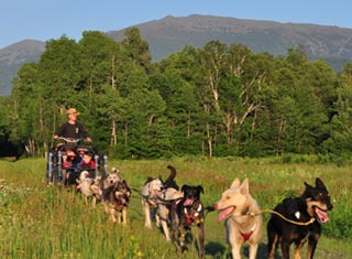 Summer dog sledding at Muddy Paw Sled Dog Kennel in Jefferson NH