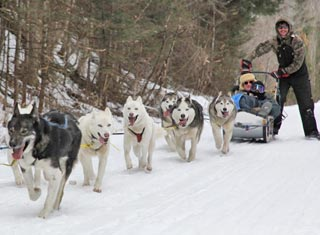 Dog sledrides at Muddy Paw Sled Dog Kennel in Jefferson NH